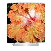 Orange Hibiscus After The Rain Shower Curtain