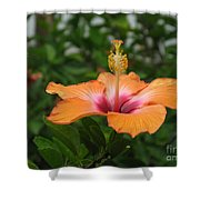 Orange Hibiscus Blossom Shower Curtain