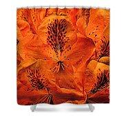 Orange Is In Shower Curtain