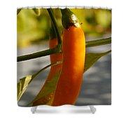 Orange Jalapeno Pepper  Shower Curtain