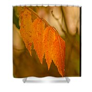 Orange Leaves Of Fall Shower Curtain