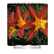 Orange Lillies Shower Curtain