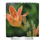 Orange Lily Photo 2 Shower Curtain