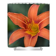 Orange Lily Photo 6 Shower Curtain