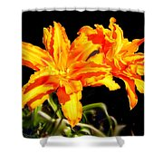 Orange Lily Twins Shower Curtain