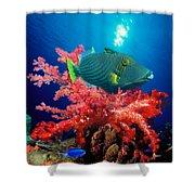 Orange-lined Triggerfish Balistapus Shower Curtain