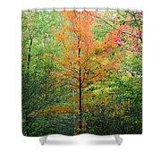 Orange Maple Shower Curtain