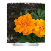 Orange Marigolds   # Shower Curtain
