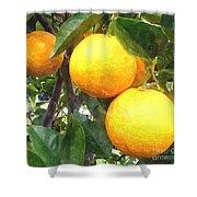 Orange On Tree Shower Curtain