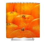 Orange Oranges Shower Curtain