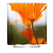 Orange Poppy In Sunlight Shower Curtain