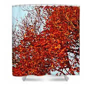 Orange Red Blanket Shower Curtain