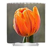Orange Red Tulip Square Shower Curtain