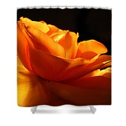 Orange Rose Glowing In The Night Shower Curtain