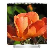Orange Rose Shower Curtain