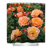 Orange Roses Shower Curtain