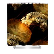 Orange Sea Nettle Shower Curtain