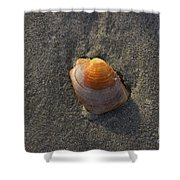 Orange Seashell Shower Curtain
