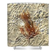 Orange Seaweed Shower Curtain