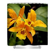 Orange Spotted Lip Cattleya Orchid Shower Curtain