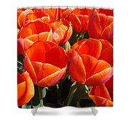 Orange Spring Tulip Flowers Art Prints Shower Curtain