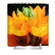 Orange Star Shower Curtain