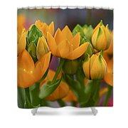 Orange Stars - Floral - Ornithogalum Dubium - Sun Stars Shower Curtain