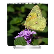 Orange Sulphur Shower Curtain