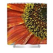 Orange Sunflower Close Up Shower Curtain