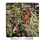 Orange Swallowtail Shower Curtain