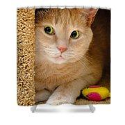 Orange Tabby Cat In Cat Condo Shower Curtain