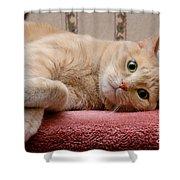 Orange Tabby Cat Lying Down Shower Curtain
