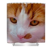 Orange Tabby Kitten Shower Curtain