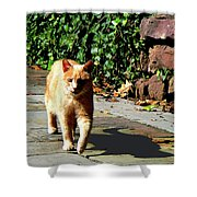 Orange Tabby Taking A Walk Shower Curtain