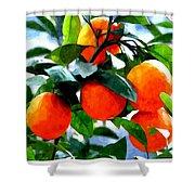 Orange Tree In Springtime  Shower Curtain