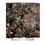 Orange Tree On Rustic Background Shower Curtain