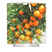 Orange Trees With Fruits On Plantation Shower Curtain