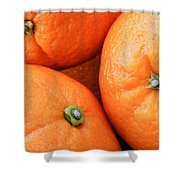 Orange Trio Shower Curtain