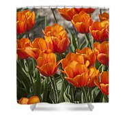 Orange Tulips  Shower Curtain
