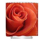 Orange Twist Rose 3 Shower Curtain
