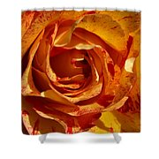 Orange Variegated Rose Shower Curtain