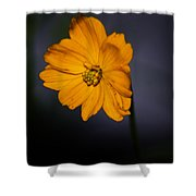 Orange Wild Flower Shower Curtain