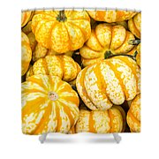 Orange Winter Squash On Display Shower Curtain