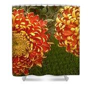 Orange-yellow Chrysanthemums Shower Curtain
