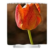 Orange/yellow Tulip Shower Curtain