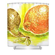 Oranges And Pears Shower Curtain