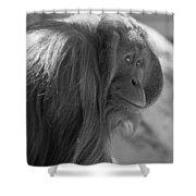 Orangutan Black And White Shower Curtain