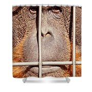 Orangutan Face Watching From Behind Steel Bars Shower Curtain