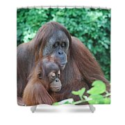 Orangutan Family Shower Curtain