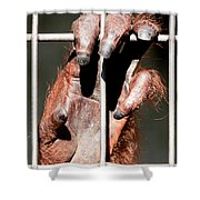 Orangutan Hand Close-up Shower Curtain